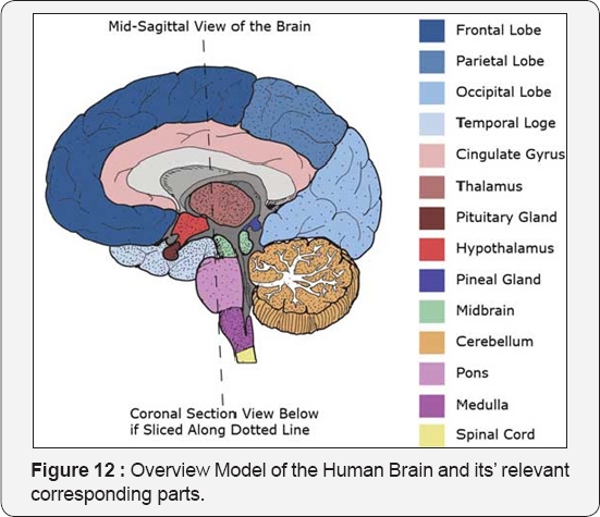 Psychology and behavioral science international journal pbsij the reptilian brain ccuart Image collections